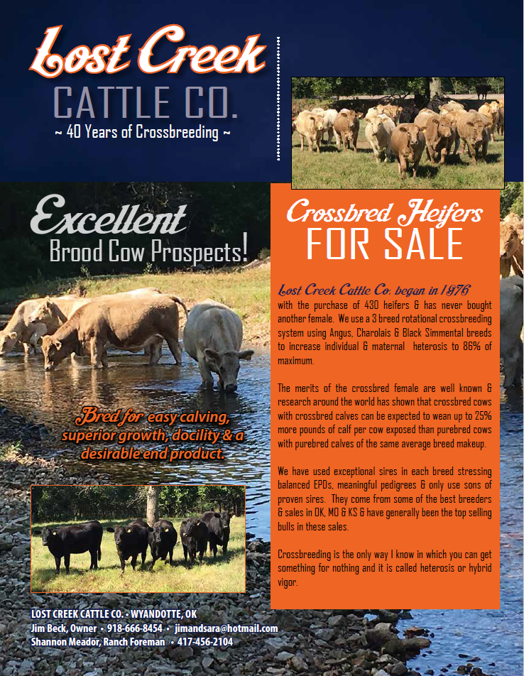 Crossbred heifers for sale - flyer image